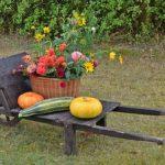 Agricultură – cărţi utile