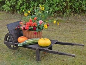 carti-agricultura