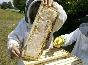 carti-apicultura